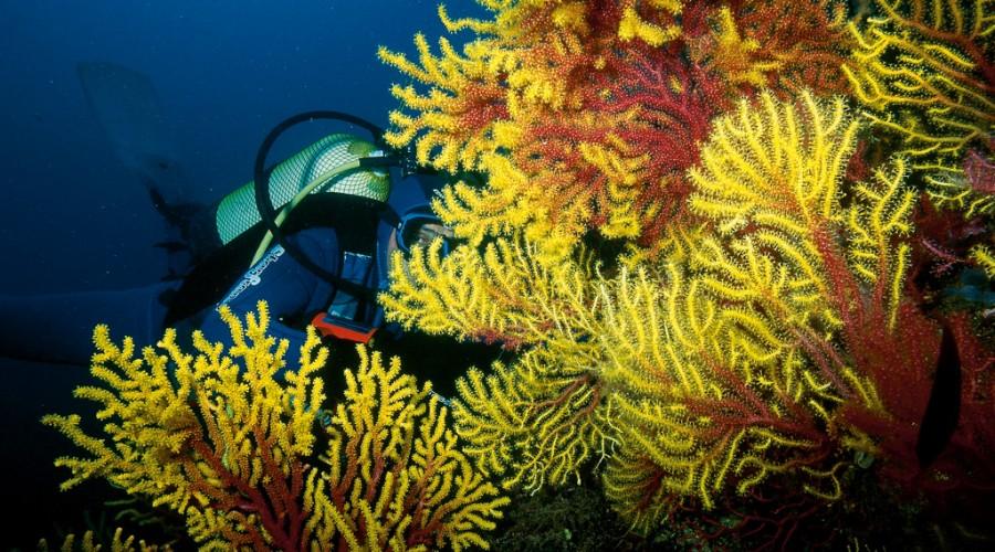 submarinista gaudint de la flora a les Illes Medes