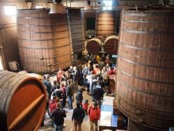 Es duplica el nombre de visitants en la segona edició del Festival del Vi, Vívid